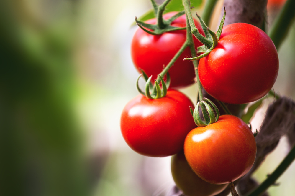 Why You Should Eat More Tomatoes