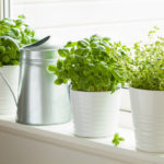 Ultimate Guide To Growing Herbs In Your Kitchen | Dogtown Pizza