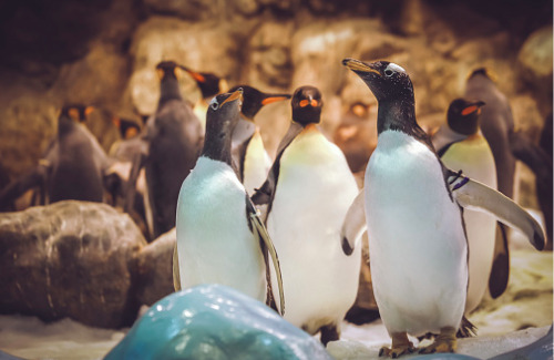 penguins-at-a-zoo